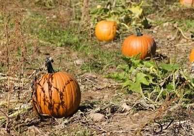 Zipkin pumpkin patch