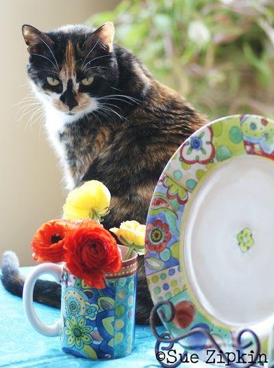 Zipkin plate cat